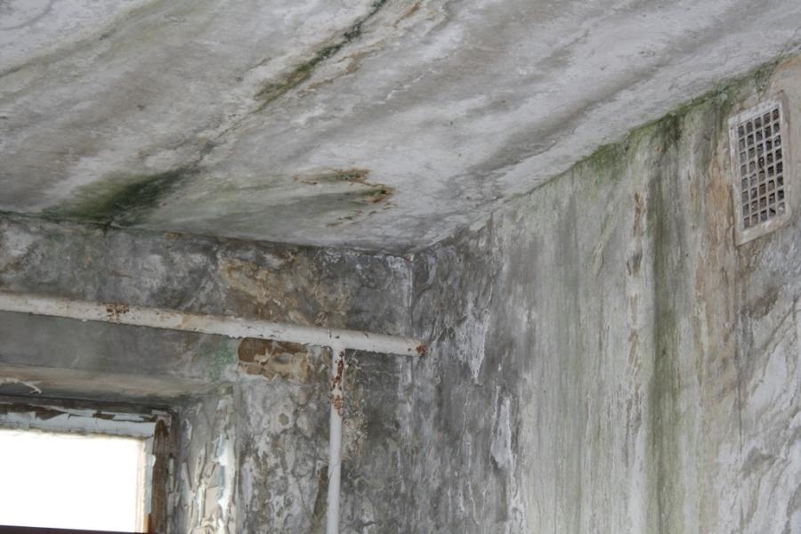 Защищаем дом от грибка и плесени.